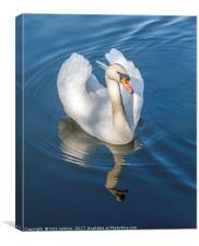 Mute Swan and reflection on a Lake, Canvas Print