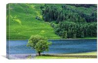 The Lonely Tree at Buttermere in the Lake District, Canvas Print