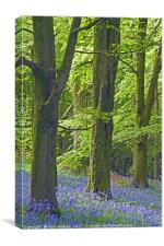 Three Trees in the Bluebell Woods, Canvas Print