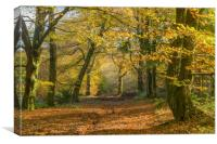 The Wentwood Forest in Autumn, Canvas Print