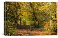 Wentwood Forest on sunny autumn day Monmouthshire, Canvas Print
