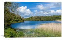 Bosherston Lily Ponds Pembrokeshire in Spring, Canvas Print
