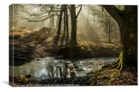 Light and Shadow Forest of Dean 6 , Canvas Print