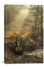 Light and Shadow Forest of Dean 1, Canvas Print