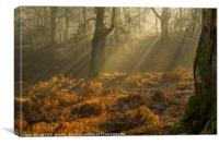 Light and Shade in the Forest of Dean 3 , Canvas Print