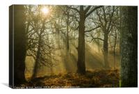 Light and Shadow Forest of Dean 4 , Canvas Print