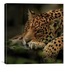 Just one of those days, Canvas Print
