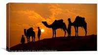 Camels and minders in silhouette, India, Canvas Print