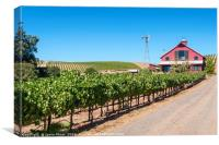 Beautiful view of wine vineyards in Napa Valley., Canvas Print