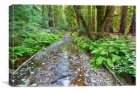 Redwood Forest of Muir Woods National Monument., Canvas Print