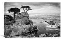 The famous Lone Cypress tree at Pebble Beach in Mo, Canvas Print