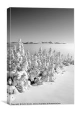 Snowy forest in Quebec, Canvas Print