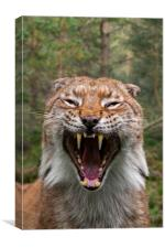 Hissing Lynx in Forest, Canvas Print