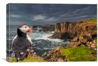 Puffin Watching Shetland Coast, Canvas Print