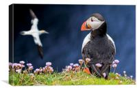 Atlantic Puffin Watching Soaring Gannet, Canvas Print