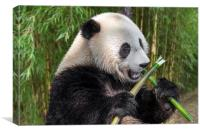 Cute Panda Bear Eating Bamboo in Forest, Canvas Print