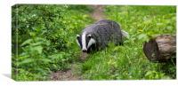 English Badger, Canvas Print