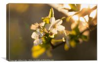 Summer Time Blossom, Canvas Print