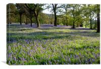 Bluebell Woods, Ilkley, Yorkshire, Canvas Print