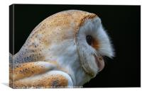 Barn Owl Portrait , Canvas Print