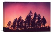 Sunset Pines, Canvas Print