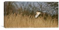 Searching amongst the reeds, Canvas Print
