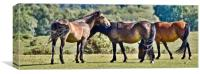 New Forest Ponies, Canvas Print