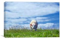 Sheep May Graze, Canvas Print
