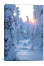 Arctic sunset, Lapland, Canvas Print
