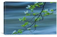 dogwoods against current , Canvas Print