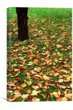 Fallen leaves on green grass, Canvas Print
