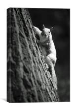 Squirrel under the sun, Canvas Print
