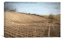 cultivated field, Canvas Print