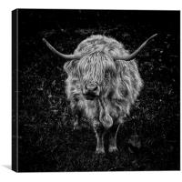 What Moo Looking At?!, Canvas Print