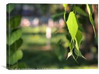 Birch branch with green leaves, Canvas Print
