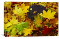 Overhead view on fallen autumn leaves of maple, Canvas Print