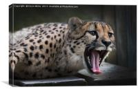 Cheetah, Canvas Print