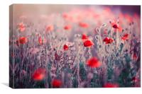 Red Field Poppies , Canvas Print