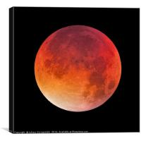Bloody moon on black sky, Canvas Print