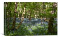 Bluebells and birches, Canvas Print