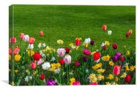 Tulips and grass, Canvas Print
