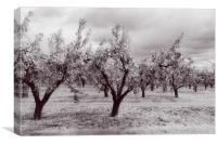 Worcestershire Pear Orchard, Canvas Print
