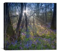 Sunrise in a Bluebell Wood, England, Canvas Print