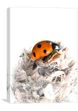 The Seven Spot Ladybird - Artistic Approach., Canvas Print