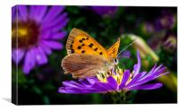 Small Copper Butterfly, Canvas Print