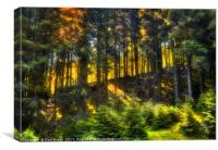 slope in the forest, Canvas Print