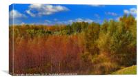 autumn colors of the forest, Canvas Print