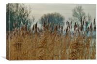 Frosty Reeds, Canvas Print