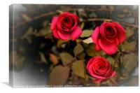 Roses for romance, Canvas Print
