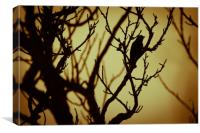 Bird In Tree Silhouette, Canvas Print